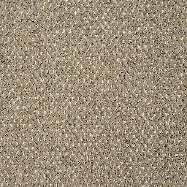 Atlanta Cut Loop Carpet